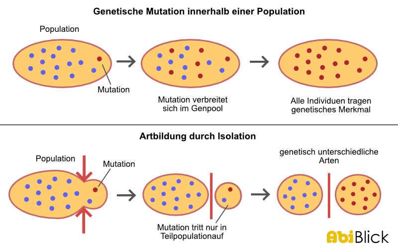 Genetische Isolation