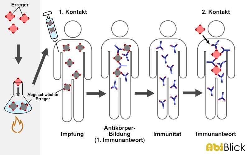 Aktive Immunisierung Abiblick De