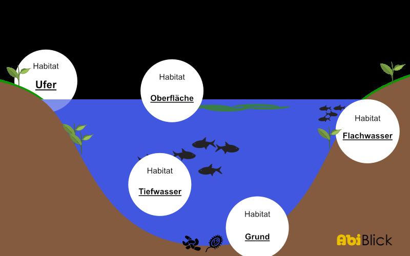 Biotop Definition Beispiel Und Biotopschutz Mit Video 7 9